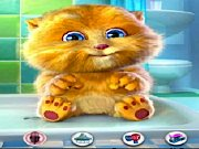 Le chat Ginger