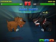 championnat de combat chien