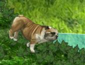 jeu de bulldog